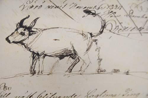 teckning av oxe